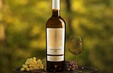 Nobiles Falanghina: il vitigno nobile dell'Agro Dauno Pugliese